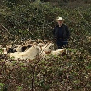 Targeted Grazing with Goats to Manage Invasive Species
